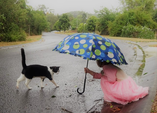 tom tom rain napa 2